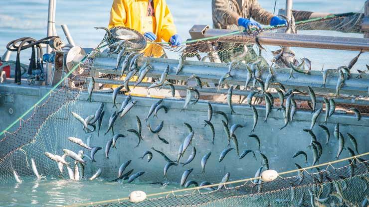 rete-e-pesci